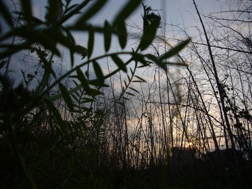 虫から見た夕暮れ